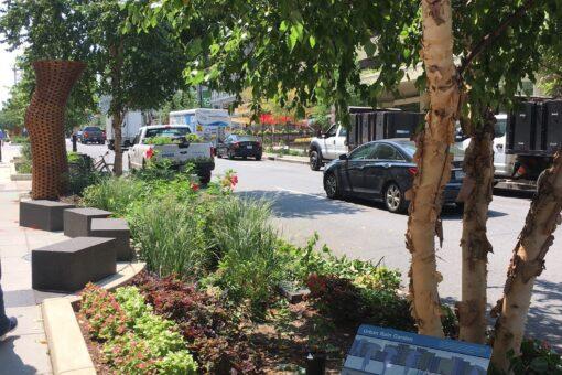 Urban rain garden July21